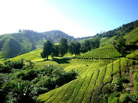 Photo free green, valley, tropical forest