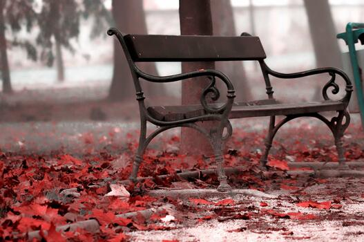 Photo free bench, fallen leaves, red leaves