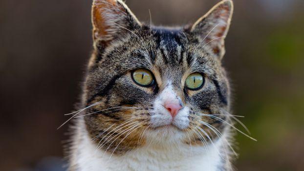 Photo free cat, looking away, close