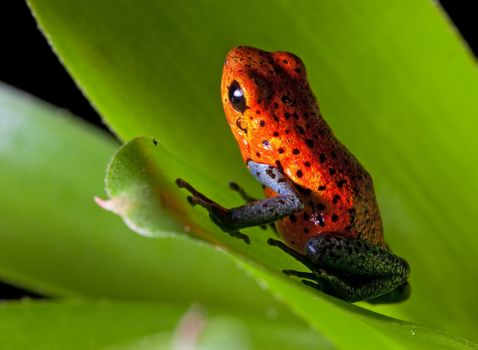Photo free frog, orange, black spots