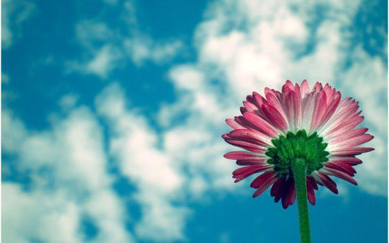 Photo free daisy family, flora, macro photography