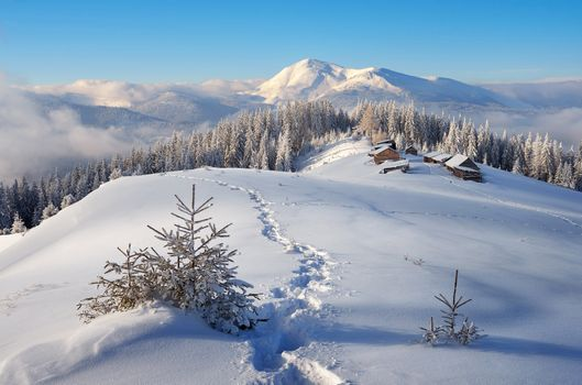 Screensaver winter landscape on the monitor