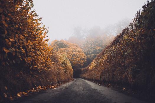 Photo free season, woody plant, autumn