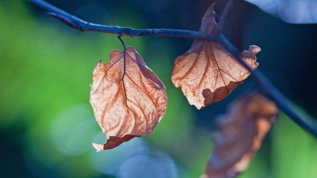 Фото бесплатно лист, сухой, увядший