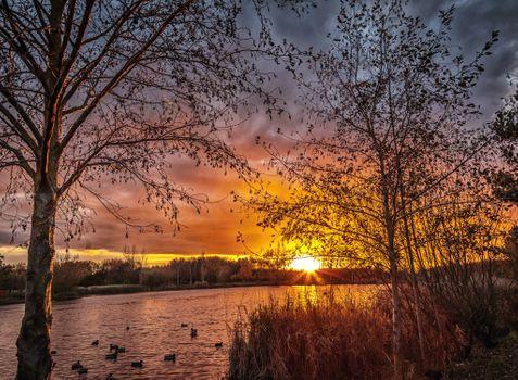 Фото бесплатно закат, парк, озеро, река, утки, сумерки, деревья, птицы, водоплавающие птицы, небо, пейзаж