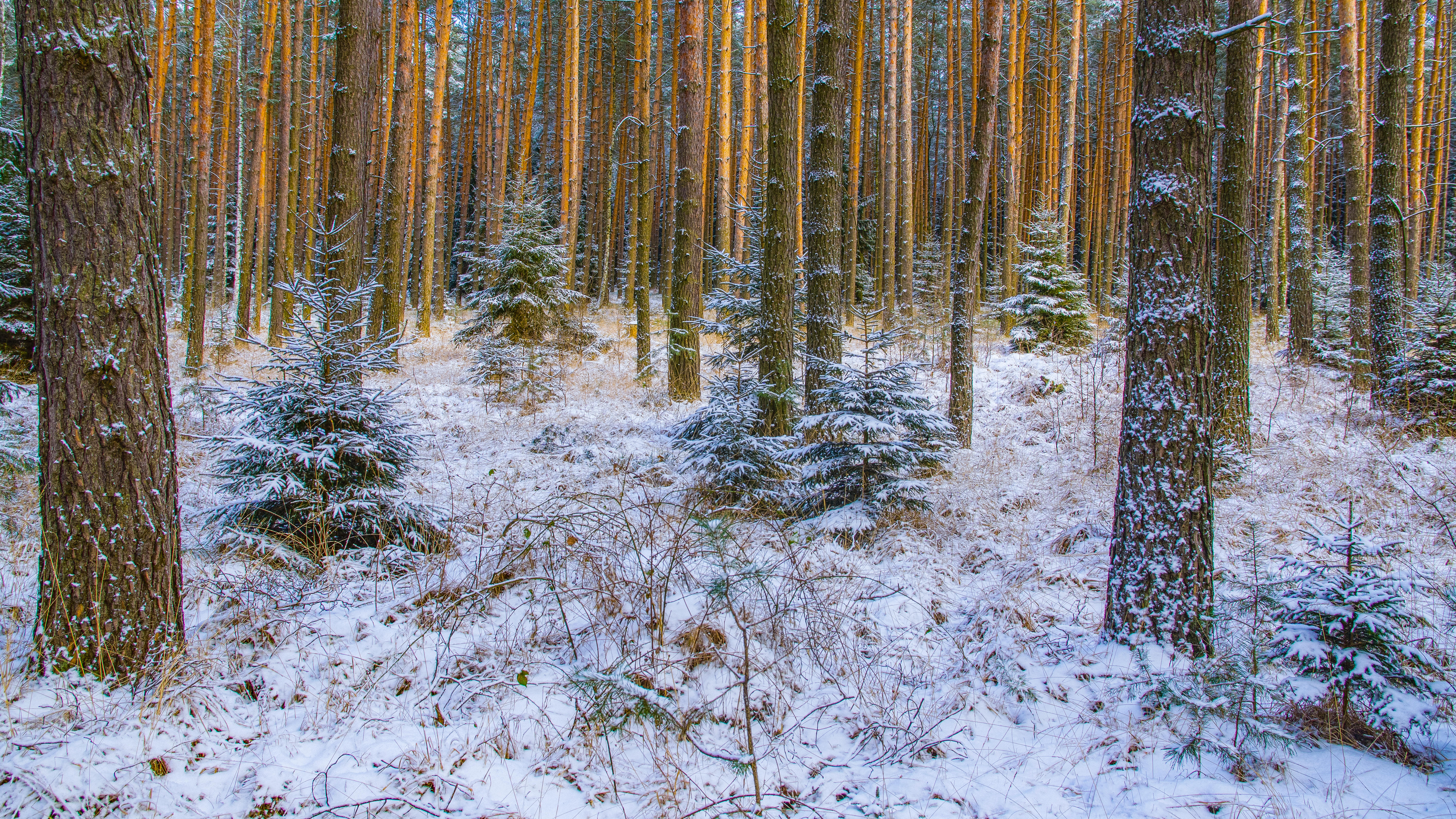 Обои зима, лес, деревья, природа