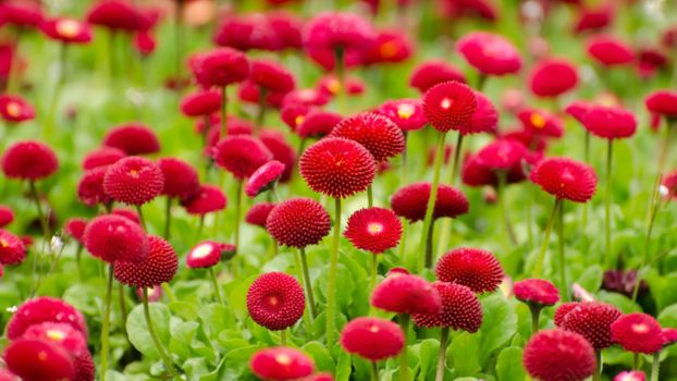 Photo free red flowers, botanical garden, blossom