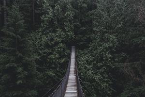 Фото бесплатно мост, подвесной мост, деревья