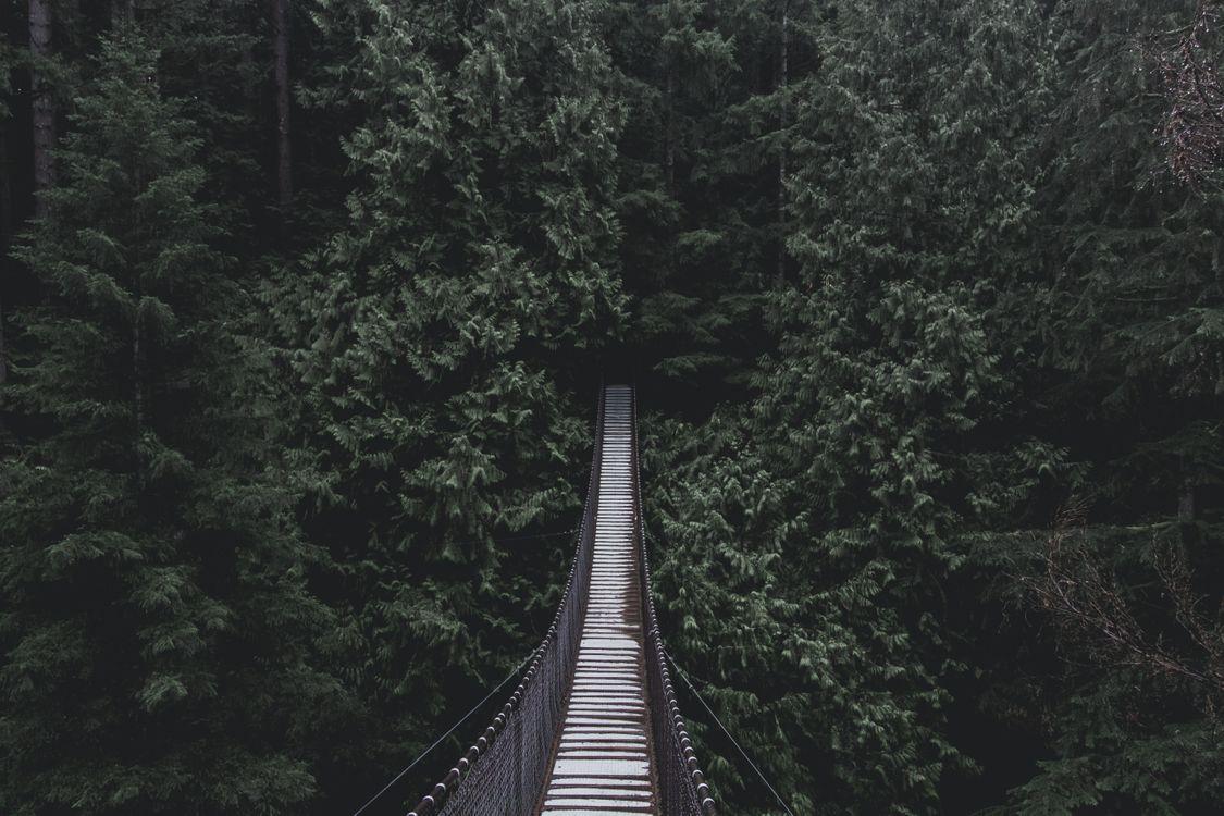 Фото бесплатно мост, подвесной мост, деревья - на рабочий стол