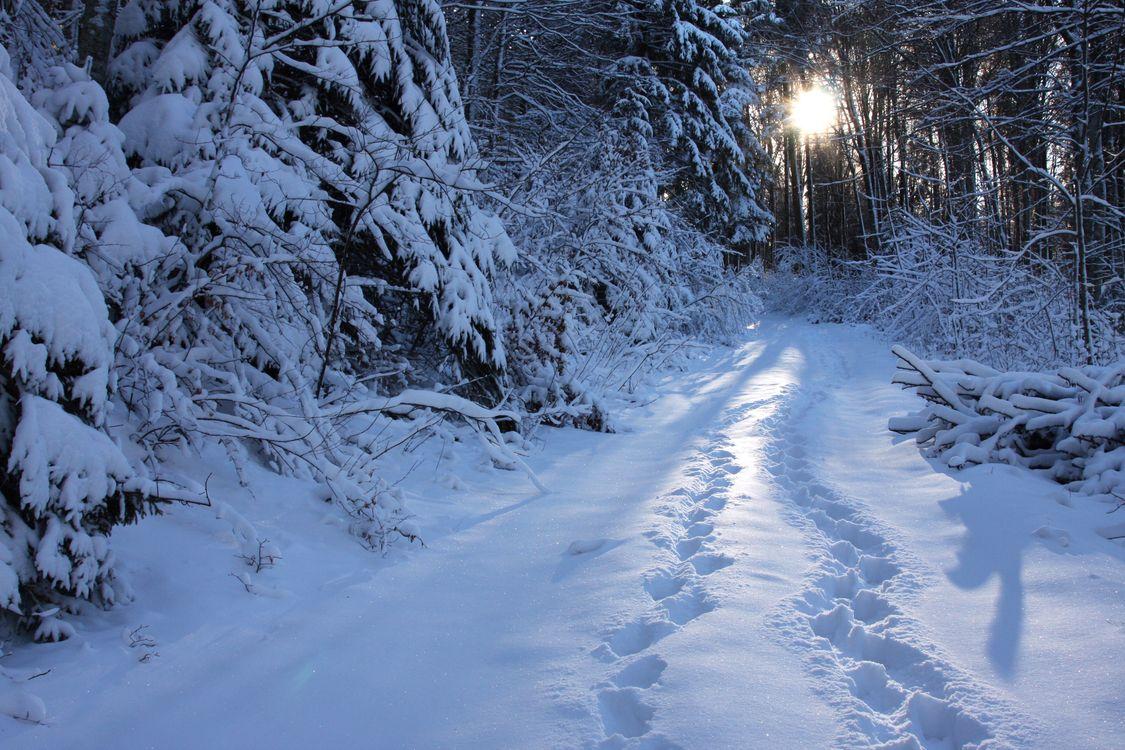 Фото бесплатно лес снег маршруты - на рабочий стол