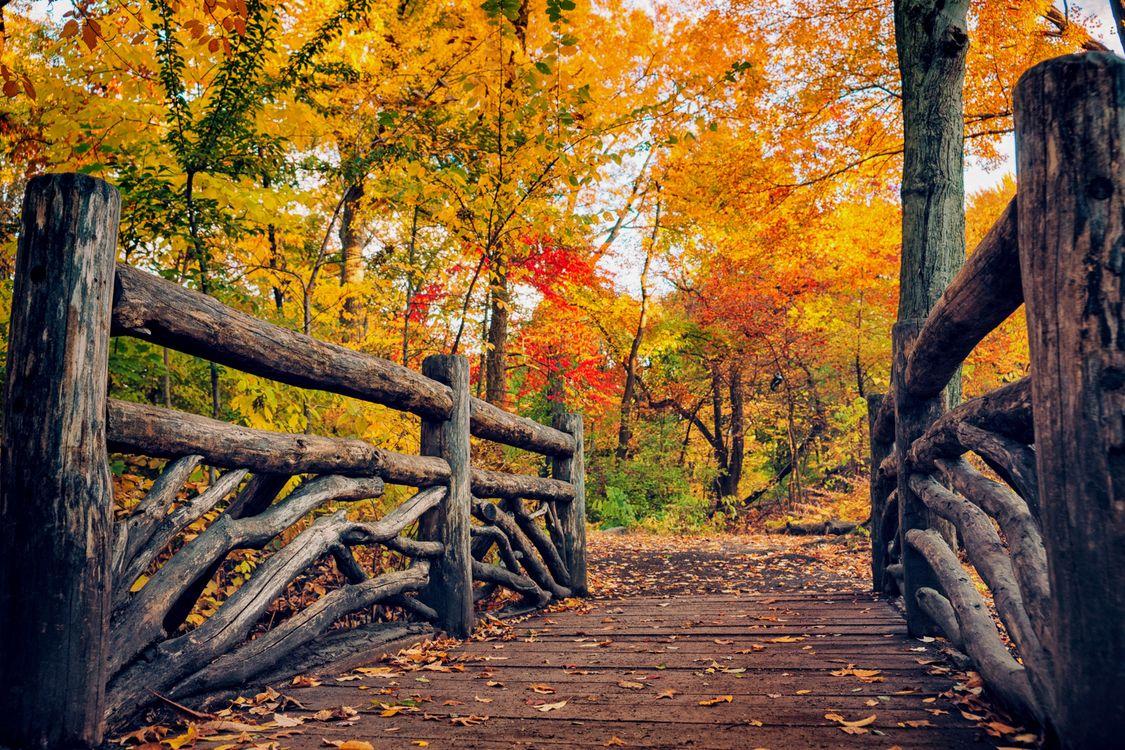Обои листья, мостик, деревья картинки на телефон