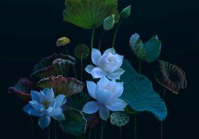 Фото бесплатно листья, обработка, цветы