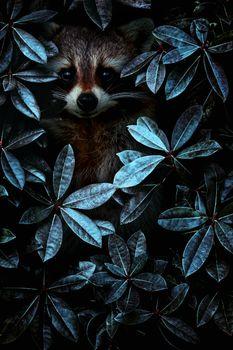 Енот спрятался =) · бесплатное фото