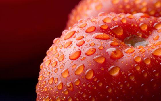 Фото бесплатно помидоры, вода, капли