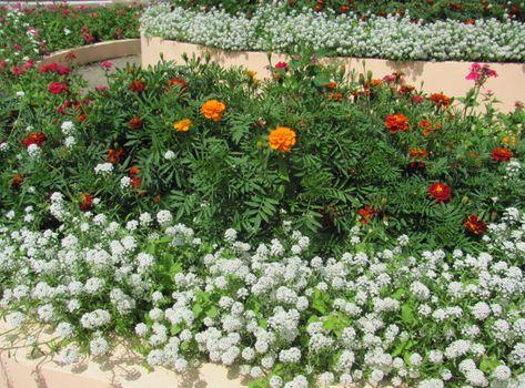 Фото бесплатно бархат, цветы, разные