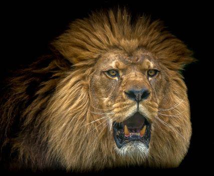 Фото бесплатно портрет, лев, король зверей