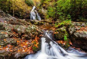 Бесплатные фото Smoky Mountains National Park,Грейт Смоки Маунтинс Парк,штат Теннесси,осень,лес,река,деревья