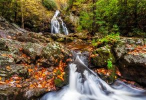 Photo free Smoky Mountains National Park, Tennessee, moss