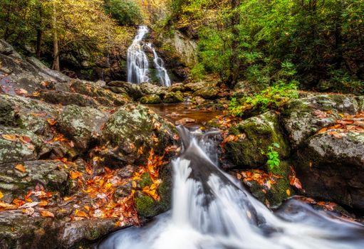 Фото бесплатно Smoky Mountains National Park, штат Теннесси, мох