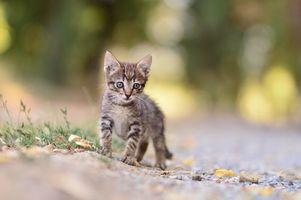 Заставки котёнок, животное, взгляд