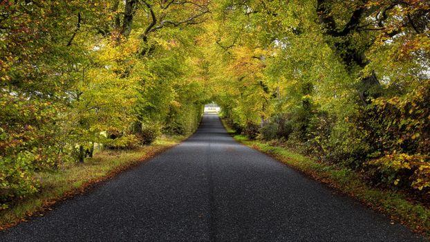 Заставки длинная дорога, зеленая, деревья