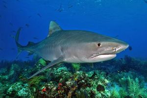 Заставки Морские обитатели, Акулы, Акула, море, морское дно