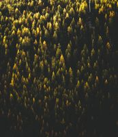 Фото бесплатно деревья, вид сверху, лес