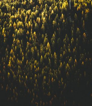 Заставки деревья, вид сверху, лес