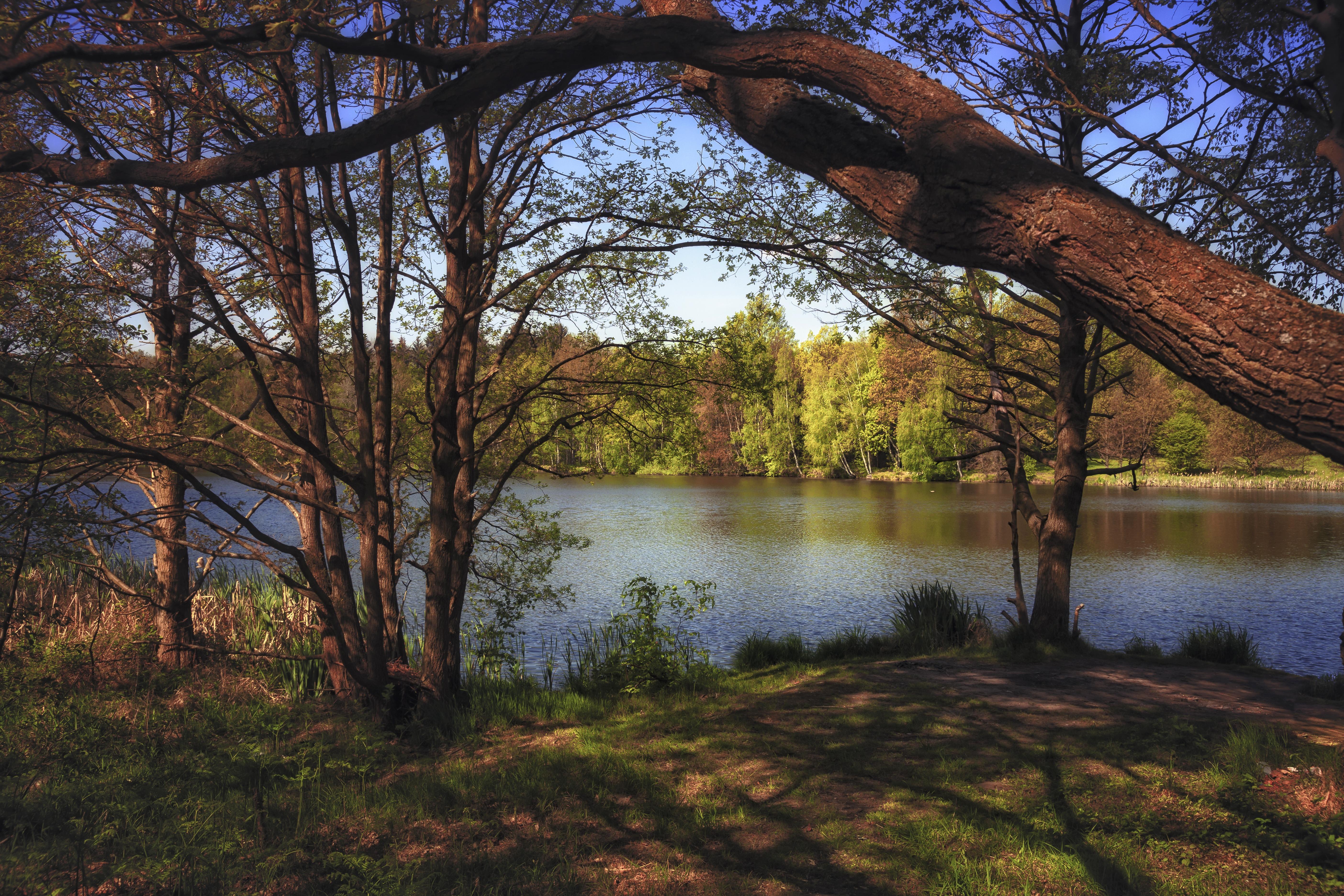 Обои лес, деревья, осень, река