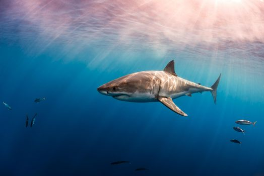 Скачать фото море, акула