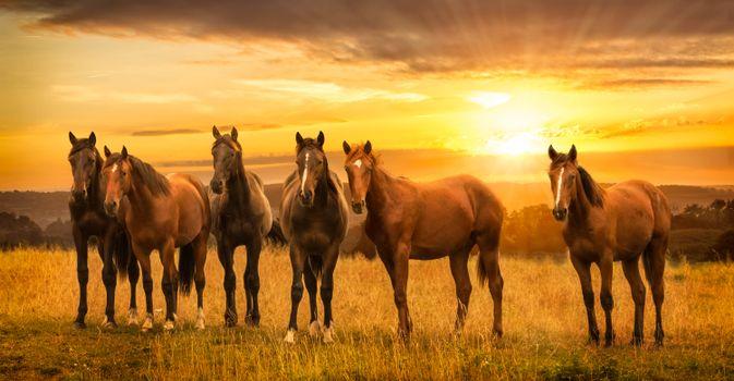 закат,поле,лошади,кони,панорама