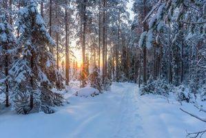 Заставки снег, тропинка, лес