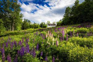 Бесплатные фото Нью-Гемпшир,Новая Англия,часовня,церковь,Sugar Hill,поле,цветы