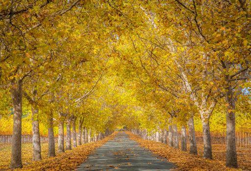 Фото бесплатно осень, пейзаж, аллея