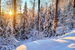 Заставки зима,лес,снег,закат,сугробы,деревья,пейзаж