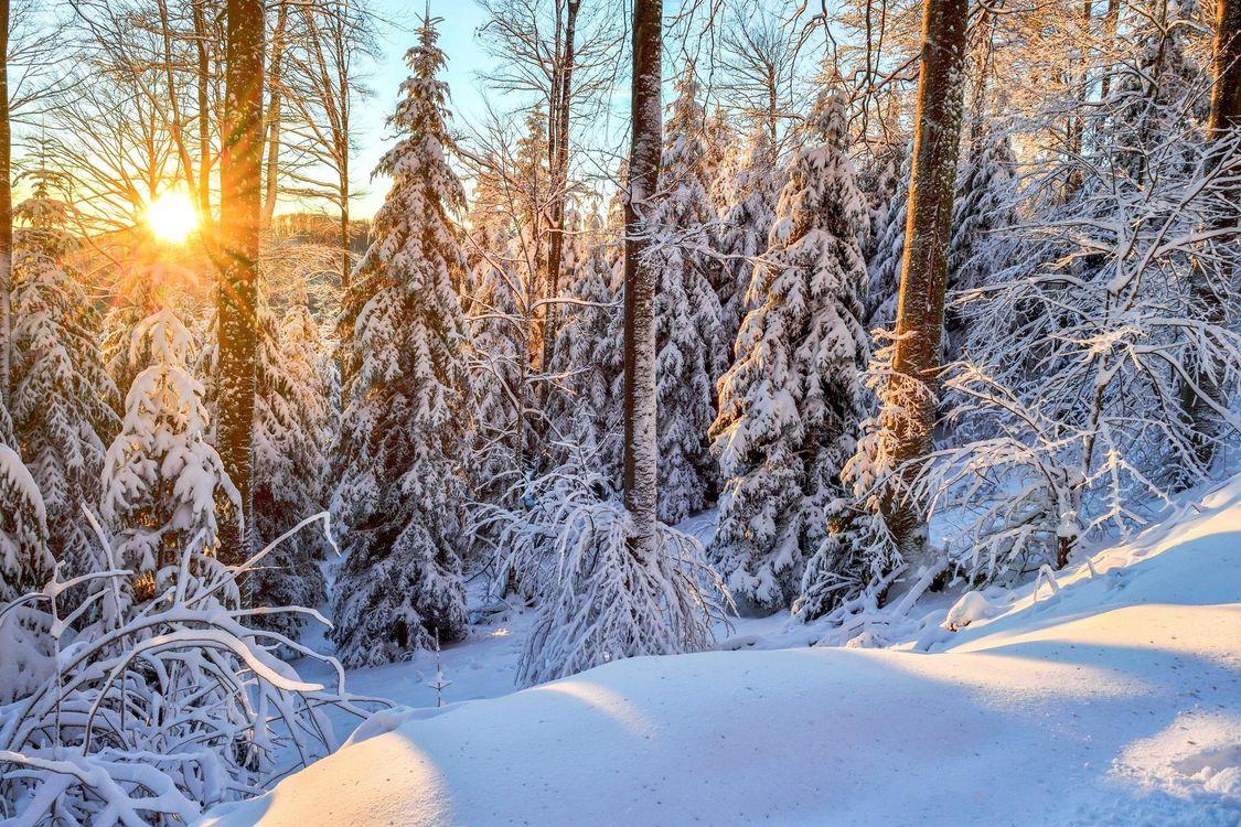 Обои зима, лес, снег, закат, сугробы, деревья, пейзаж картинки на телефон