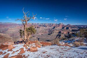 Бесплатные фото Arizona,Grand Canyon,горы,скалы,дерево,пейзаж