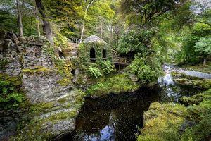 Заставки Лесной парк Толлимор, Северная Ирландия