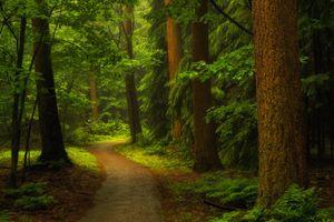 Фото бесплатно деревья, тропинка, солнечный свет