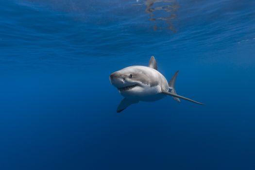 Фото бесплатно акула, подводная, рыба