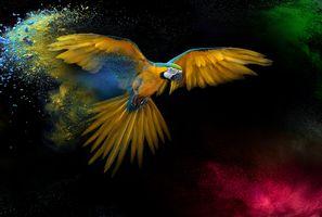 Фото бесплатно птица, желтый попугай, перья