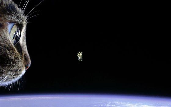 Фото бесплатно астронавт, кошка, земля