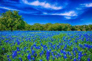 Бесплатные фото поле,цветы,люпин,деревья,природа,пейзаж
