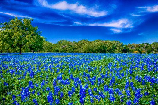 Фото бесплатно природа, люпин, пейзаж