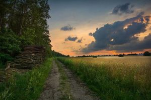 Бесплатные фото закат, дорога, поле, колосья, деревья, пейзаж