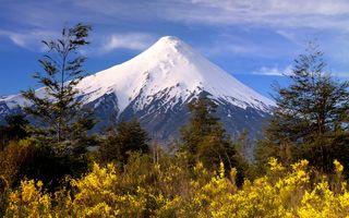 Фото бесплатно географическая особенность, дикая местность, лесной массив