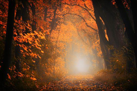 Фото бесплатно осенний лес, туннель, деревья