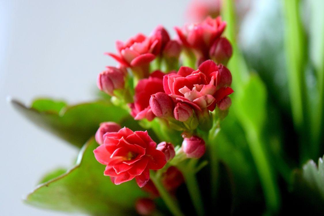 Фото бесплатно букет, лепестки, цветы, цветы