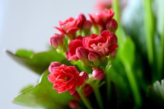Фото бесплатно букет, лепестки, цветы