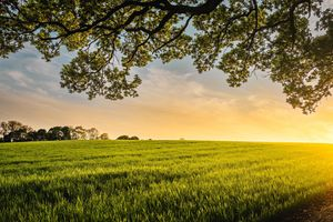 Фото бесплатно закат, луг, трава